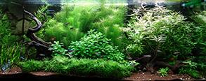 grasslin rondomatic 400, longueur pion/cavalier Aqua1